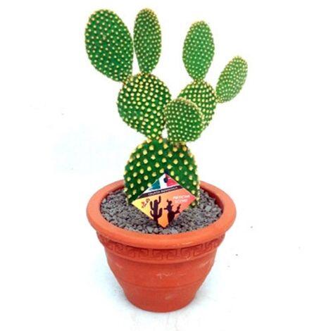 Planta Natural Cactus Opuntia en Maceta de Cerámica de M20