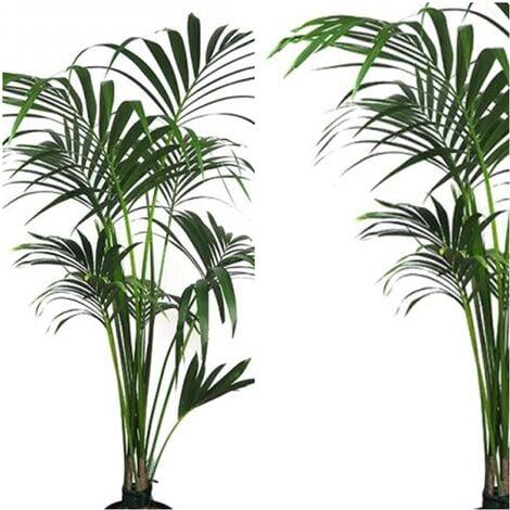 Planta Natural Kentia Forsteriana. 110 - 130 Cm