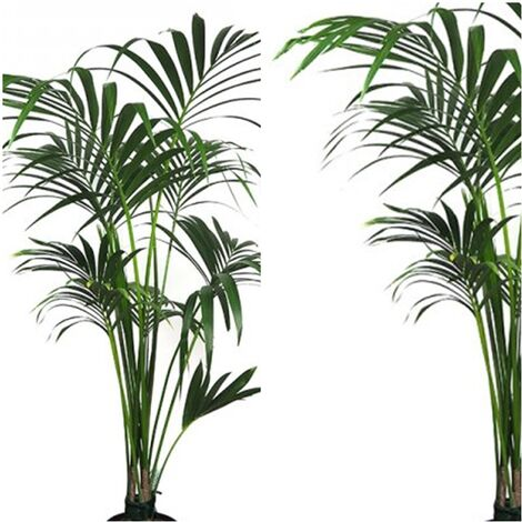 "main image of ""Planta Natural Kentia Forsteriana. 110 - 130 Cm"""