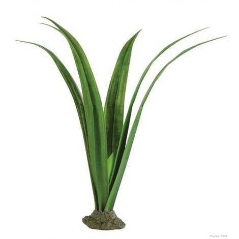 Planta Pandanus EXOTERRA