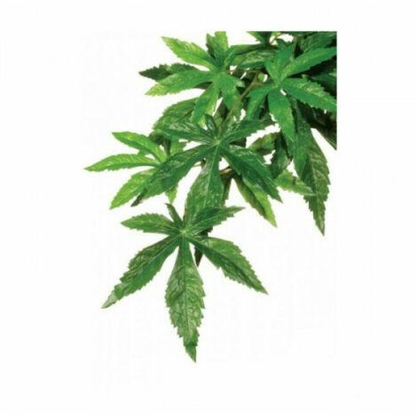 Plante Abutilon Exo Terra pour terrarium Grand modèle