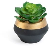 Plante consolva Zelena