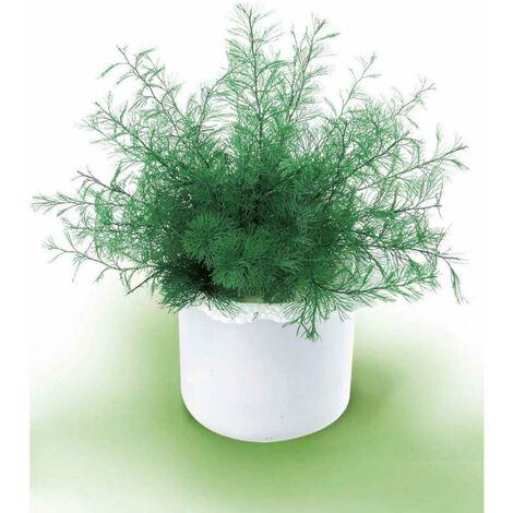 Plante de neptune