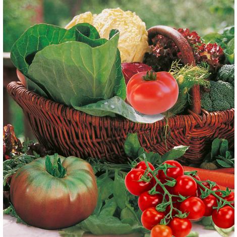 Plants de légumes en godets et en bottes - tomate Fournaise F1 - Nombreux fruits lisses, très précoce - lot de 3 godets - Printemps