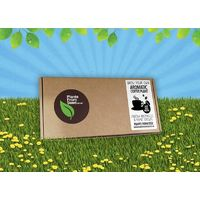 Plants From Seed - Grow Your Own Coffee Plant - Mini Kit