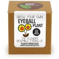 Plants From Seed - Grow Your Own Eyeball Flowers Plant Kit