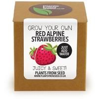 Plants From Seed - Grow Your Own Red Alpine Strawberry Kit