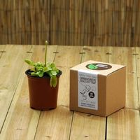 Plants From Seed - Grow Your Own Venus Fly Trap Kit