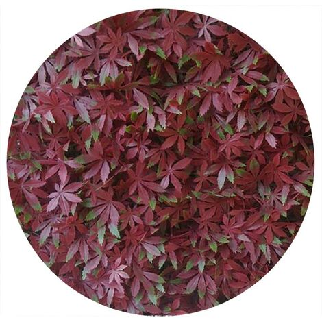Plaques clipsables de feuillage artificiel 1m² (Lot de 4) Vigne vierge rouge - Rouge
