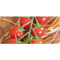 Pomodoro ciliegia innestato (vaso 14)