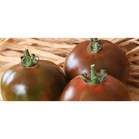 Pomodoro nero di crimea (vaso 10)