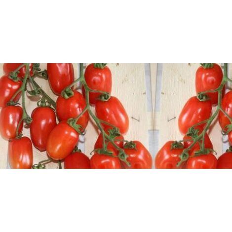 Pomodoro picadilly (vaso 10)