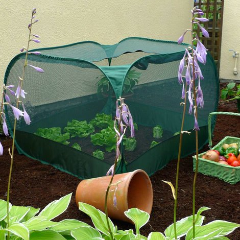 Pop Up Net Fruit Cage (Various Sizes Available)