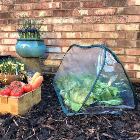 Pop Up Poly Cloche & Mini Greenhouse (Various Sizes)