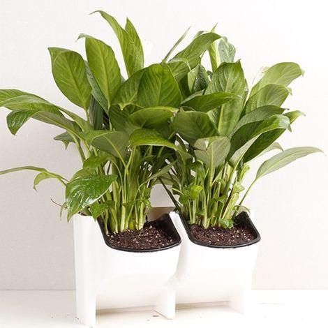 Pot de fleur blanc Mur végétal vertical intérieur et extérieur balcon Pots de fleurs muraux Combinaison créative de de en plasti