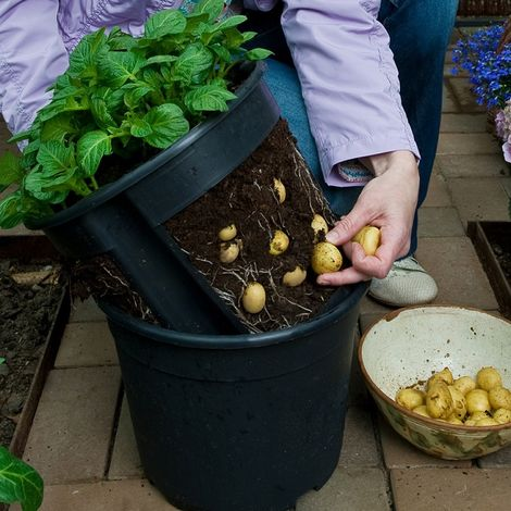 PotatoPot Kartoffel-Pflanztopf