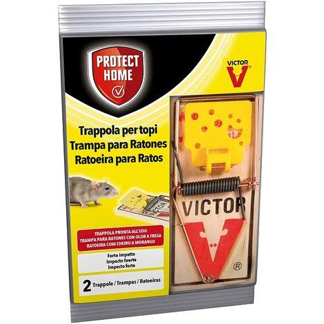 PROTECT HOME Trampas Clásicas Ratas Grande, Madera y Acero, efectiva y Limpia. Calidad Victor, Control de roedores - Envase 2 uds