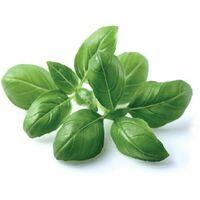 Recharge triple de Basilic pour Smart Garden - Click and Grow