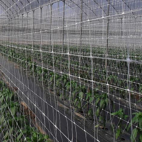 Rete per Sostegno e Supporto per Piante Piselli Ortaggi Rampicanti Nr06 1,5x10 mt STI