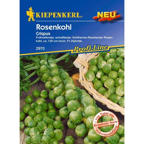 Rosenkohl Crispus (kohlhernie-resistent)