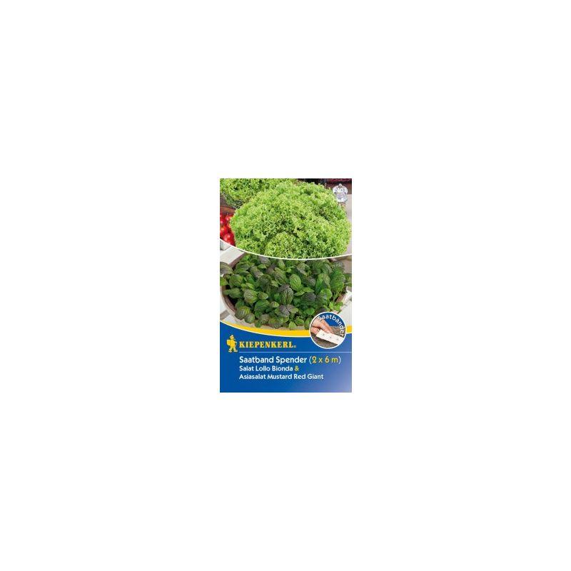 Saatband Spender-Box Salat /& Asiasalat