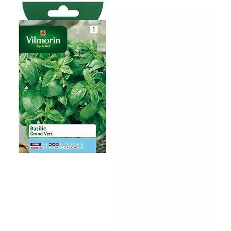 Sachet graines Basilic Grand vert