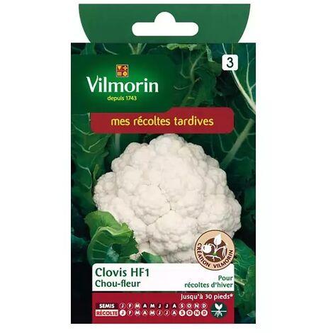 Sachet graines Chou fleur Clovis HF1