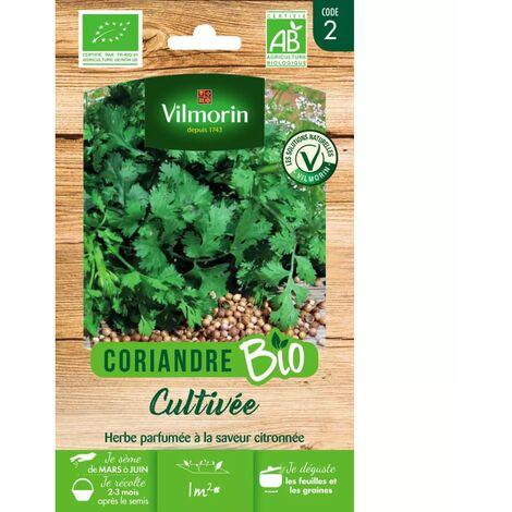 Sachet graines Coriandre Cultivée BIO - Coriandrum sativum