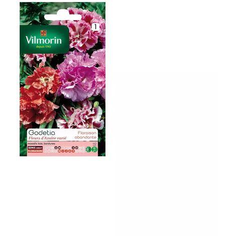 Sachet graines Godetia fleurs d'azalée varié