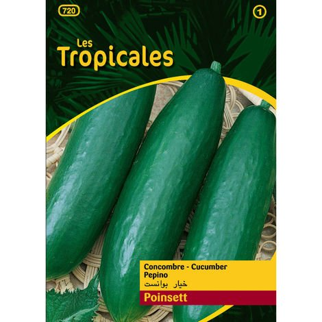 Sachet graines LES TROPICALES - Concombre Poinsett
