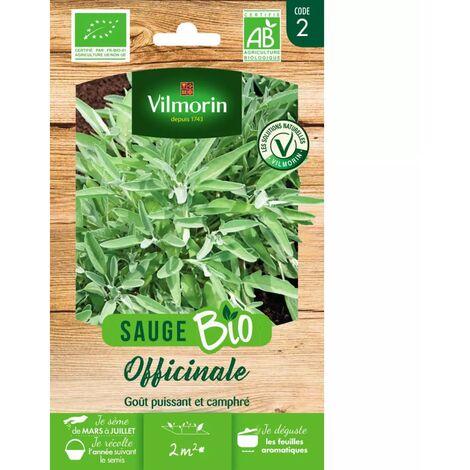 Sachet graines Sauge Officinale BIO - Salvia officinalis