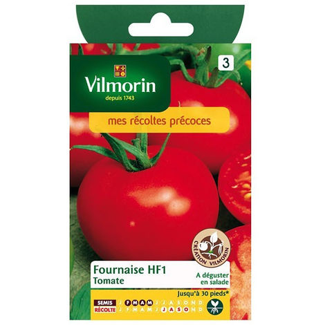 Sachet graines Tomate fournaise HF1