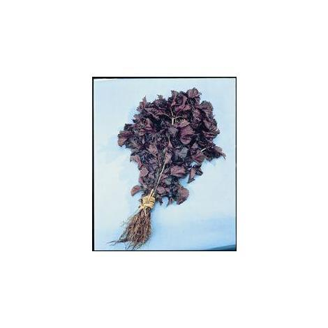 JustSeed Salad Economy Pack Shiso Red 150 Seed Perilla