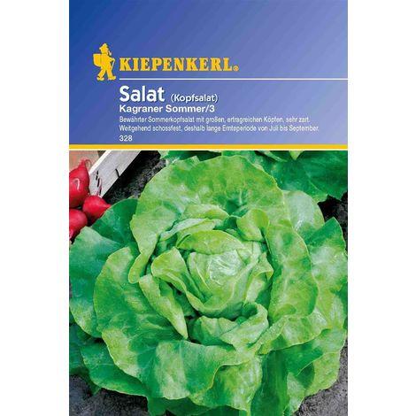 Salat Kopfsalat Kagraner Sommer 3