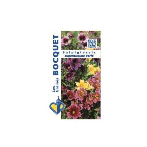 Salpiglossis à grande fleur varié - 0,8g