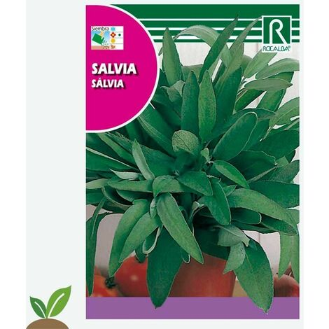 SALVIA - SOBRE DE SEMILLAS 2 G.