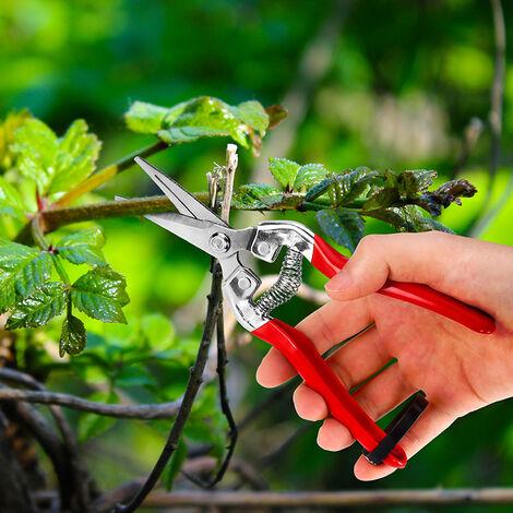 Sécateur à Fleurs Bonsai Plantes. Ciseaux pour Fleuriste et Jardinage Colibri a lame Longue en acier petit