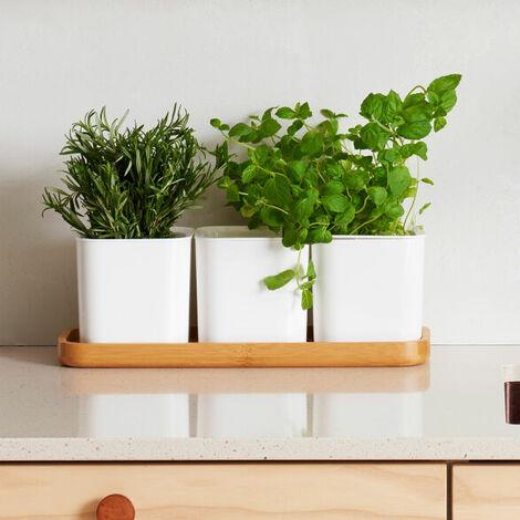 "main image of ""Self-Watering Herb Pot Set"""