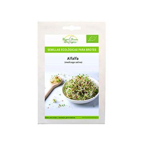 Semi biologici per germogli Alfalfa di Bueno Bello Biologico Semi per germinare germogli di Alfalfa biologici