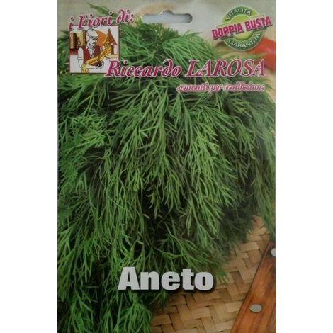 Semi di aneto buste sigillate semi di piante aromatiche