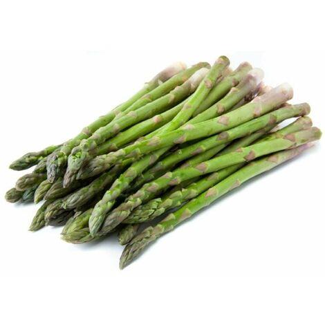 Semi di asparagi prococe argenteuil tipo grosso asparagus officinalis