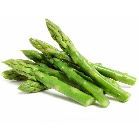 Semi di asparagi - seeds select -mary washington