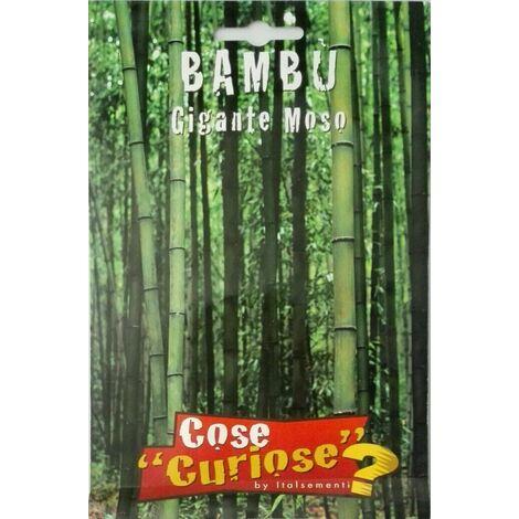 "main image of ""Semi di bambu gigante moso bamboo arredo giardino"""