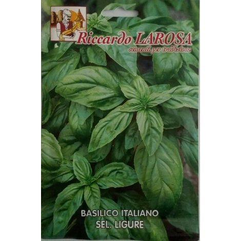 Semi di basilico genovese ligure buste sigillate semi di piante aromatiche