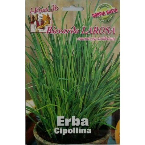 Semi di erba cipollina buste sigillate semi di piante aromatiche