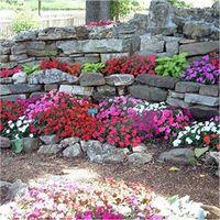 Semi Di Fiori Per Giardini Rocciosi