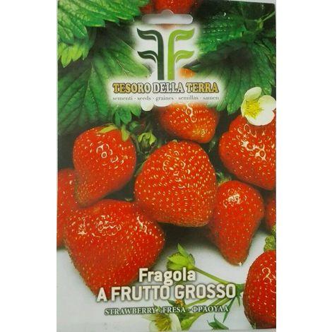 Semi di fragole a frutto grosso sigillate sementi arredo giardino balcone frutta