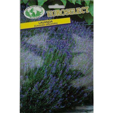 Semi di lavanda officinaliis buste sigillate semi di piante aromatiche