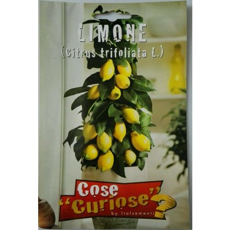 Semi di limone citrustrifoliata sigillati sementi giardino balcone