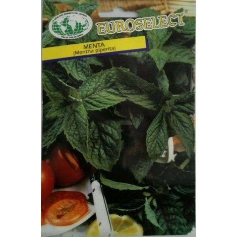 Semi di menta piperita buste sigillate semi di piante aromatiche